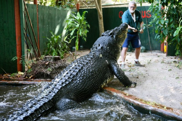 CATERS_CROC_HUNTER_15-1024x682